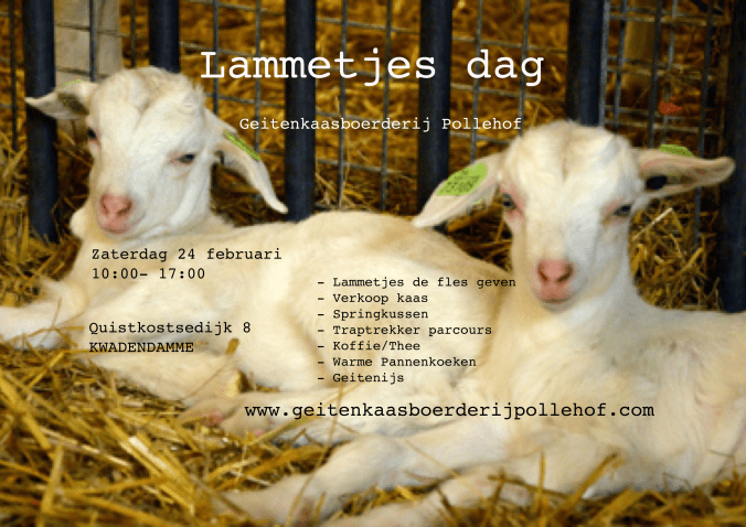 Lammetjes dag bij Geitenkaasboerderij Pollehof @ Kwadendamme | Zeeland | Nederland